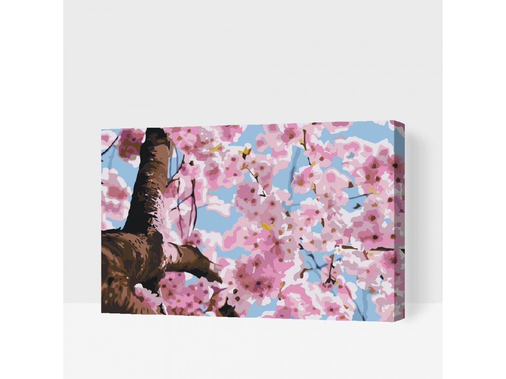 Malování podle čísel - Rozkvetlý strom (Rámování Bez rámu (pouze plátno), Velikost 40x60cm)