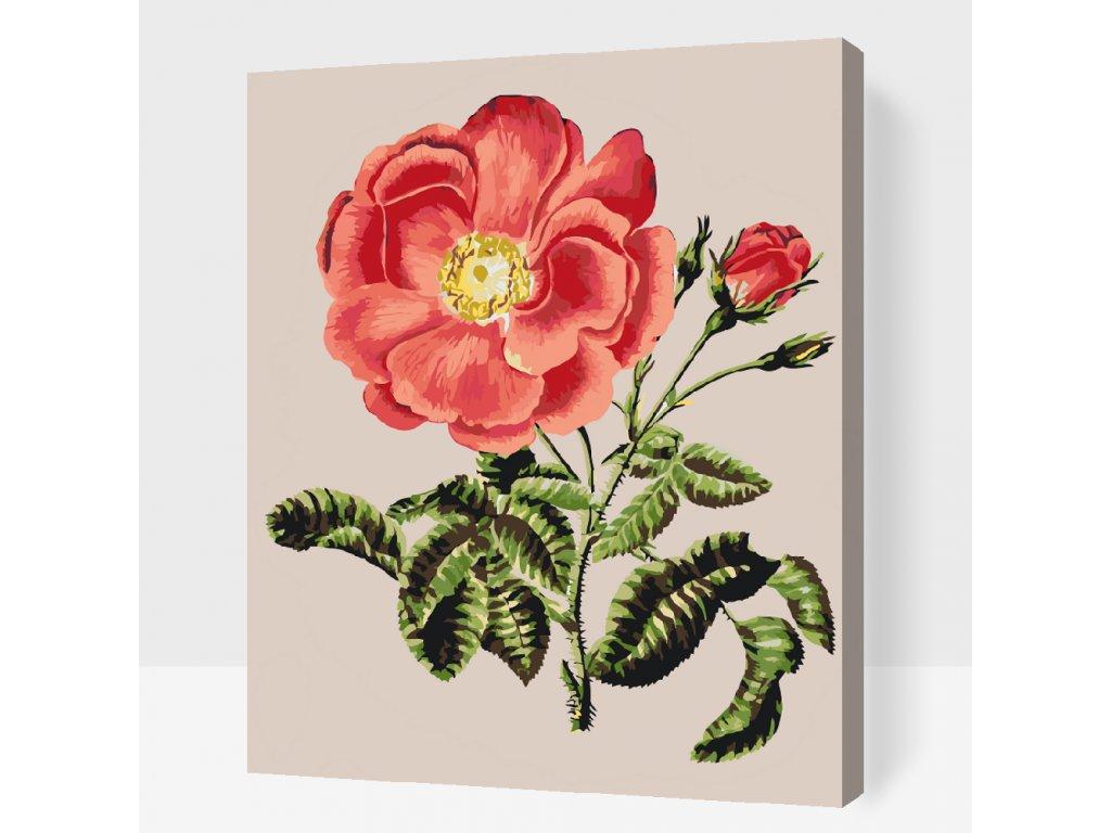 Malování podle čísel - Vintage růže (Rámování Bez rámu (pouze plátno), Velikost 40x50cm)