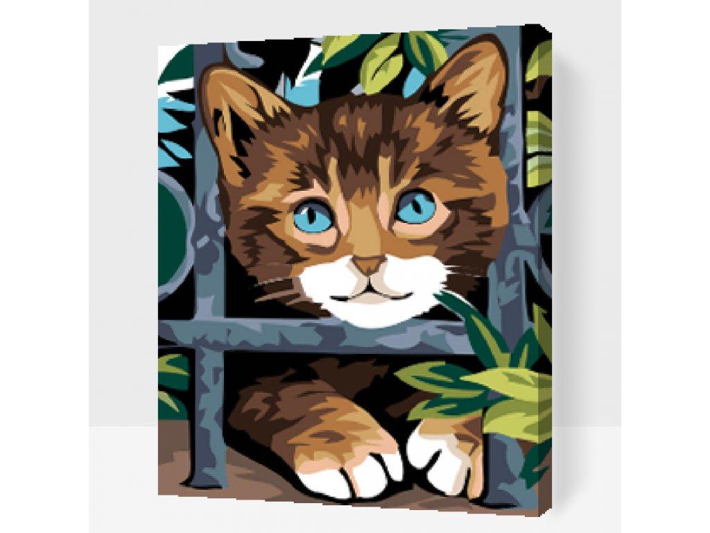 Kočička za plotem