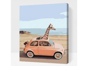 Žirafa v autě