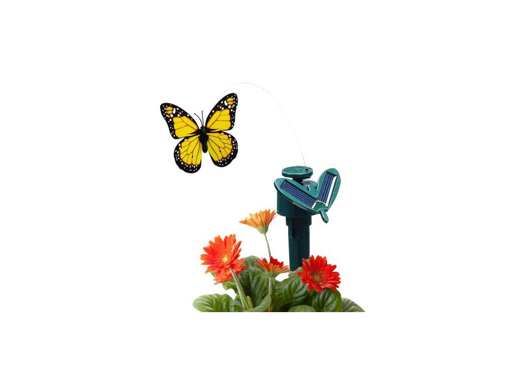 motylek zluty solar flower