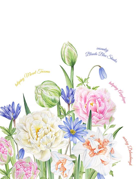 Jarní květy pro radost