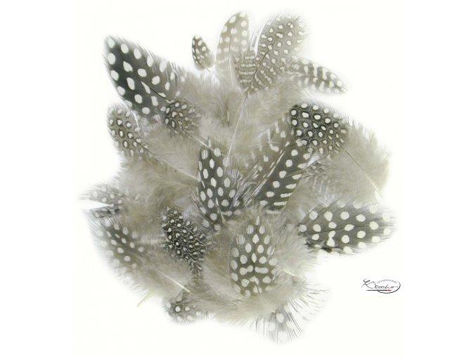 Peří z perličky 1 g, 4-6 cm - Natur