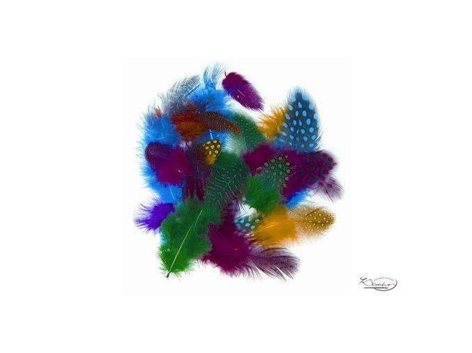 Peří z perličky 1 g, 4-6 cm, barevný mix
