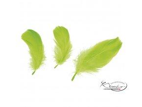 Peříčka 10g - světle zelená