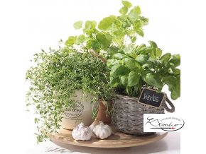 Ubrousek 33 x 33 cm / 20 ks - Flawor of Herbs