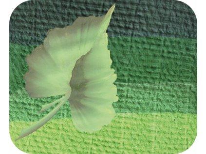 23478 barva na oblicej 6 ml eulenspiegel split cake green