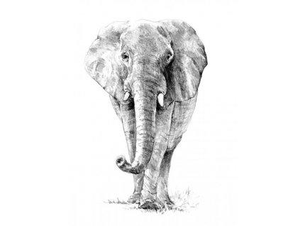 14915 1 sketching a4 slon royal langnickel