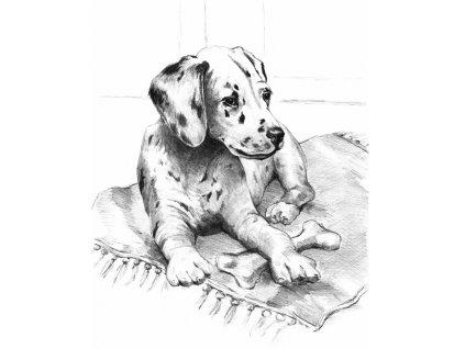 14924 1 sketching a4 pejsek royal langnickel
