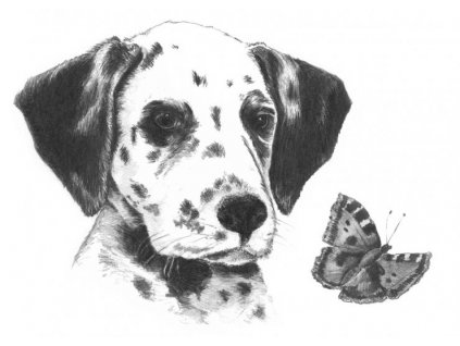 14930 2 sketching a5 dalmatin royal langnickel