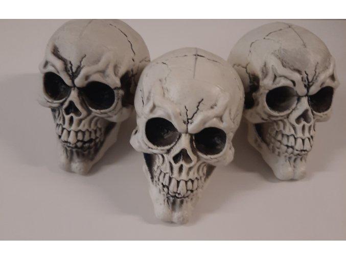 Lebka s pohyblivou čelistí