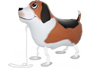 Chodící balónek pes