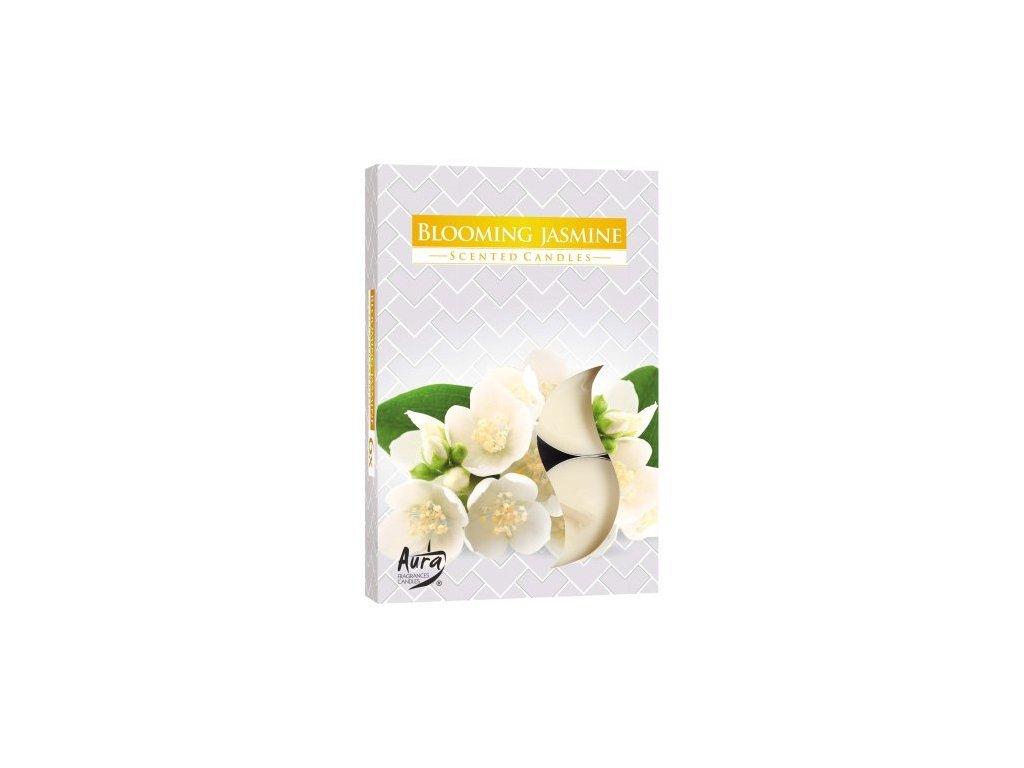 Sviečka aromatická Blooming Jasmine 6ks