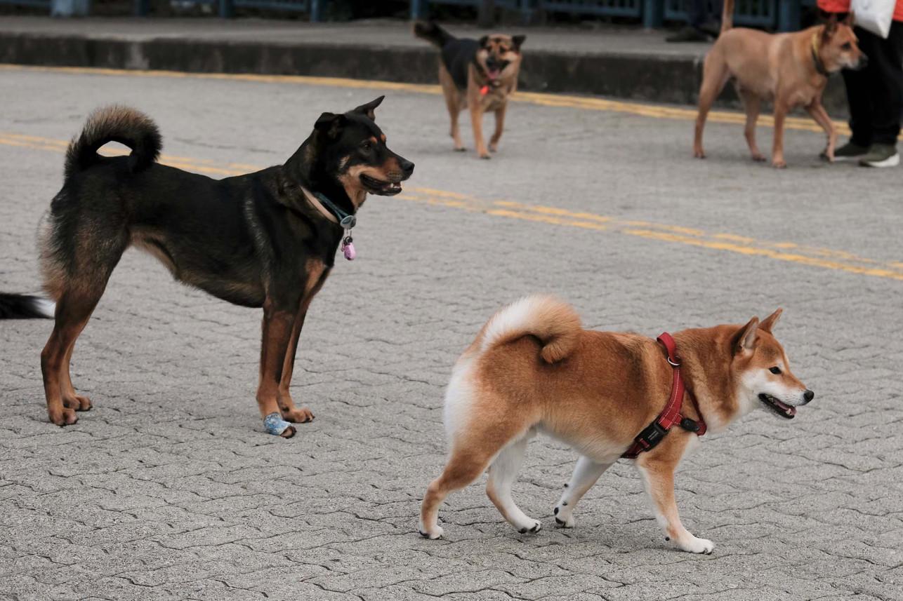 Druhý pes pozitívně testovan na koronavirus