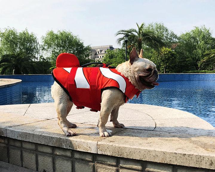 Odhalení: Umí francouzský buldoček plavat?