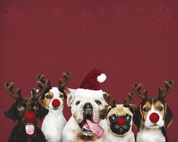 Jak udělat pejska šťastného na Vánoce?