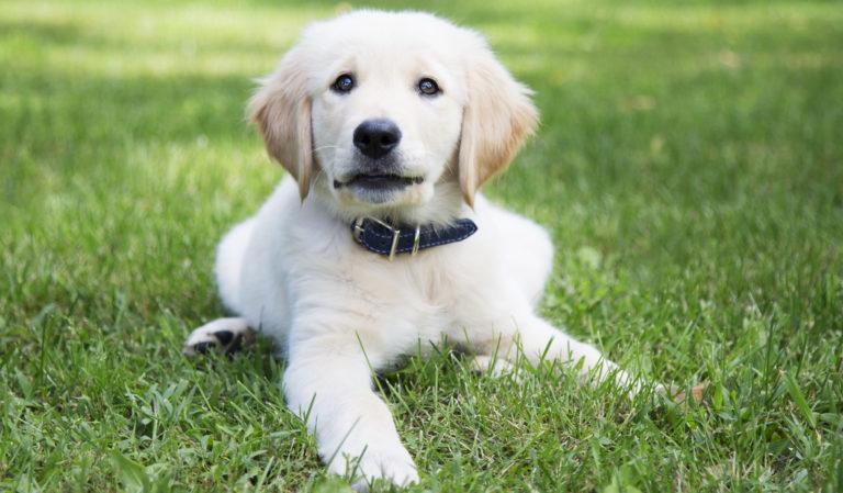 Jak si správně vybrat obojek pro psa?