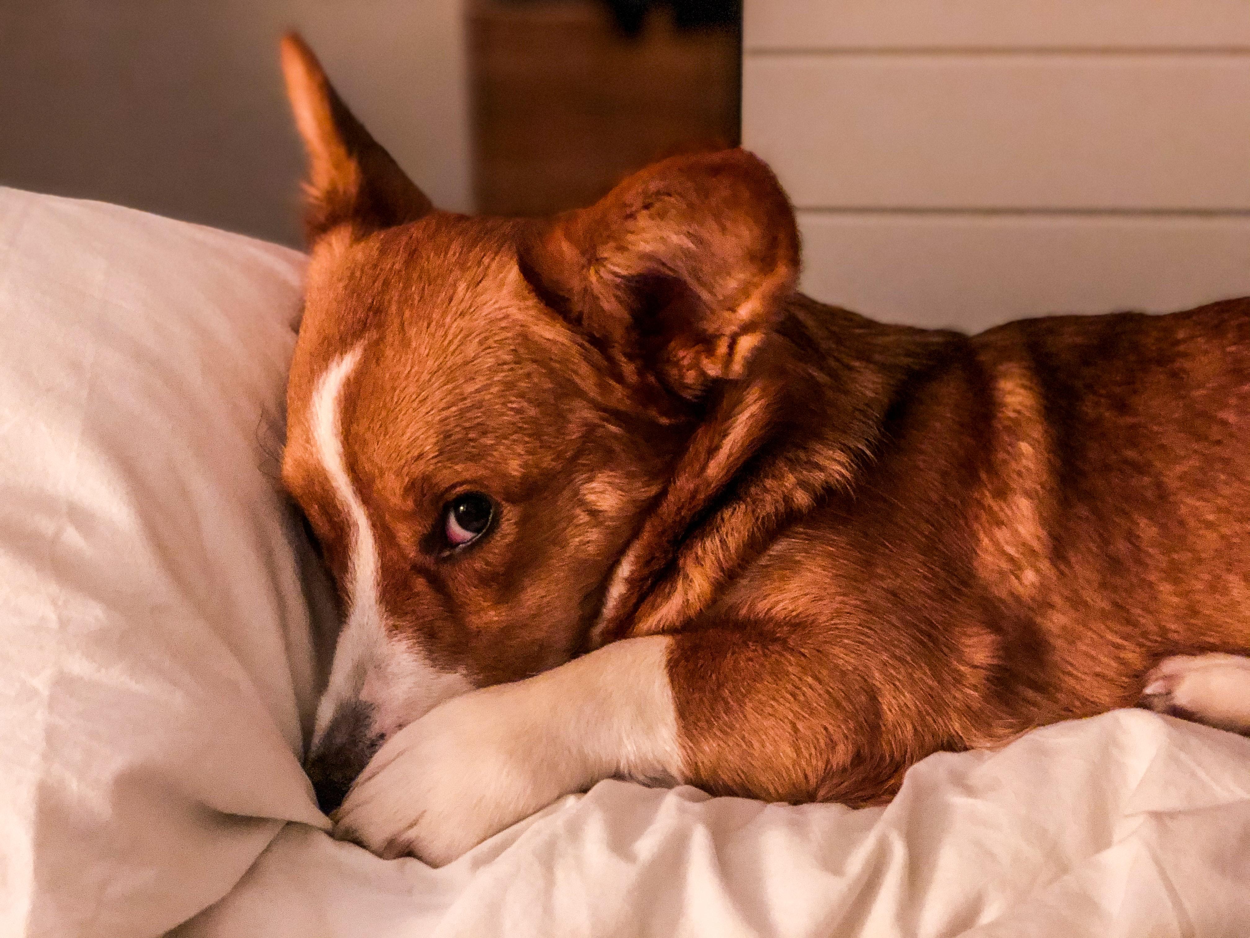 Váš domácí mazlíček vás koronavirem nenakazí, říkají odborníci