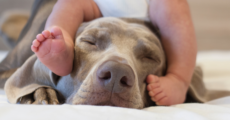 Jak připravit svého psa na dítě (pokud jste těhotná)