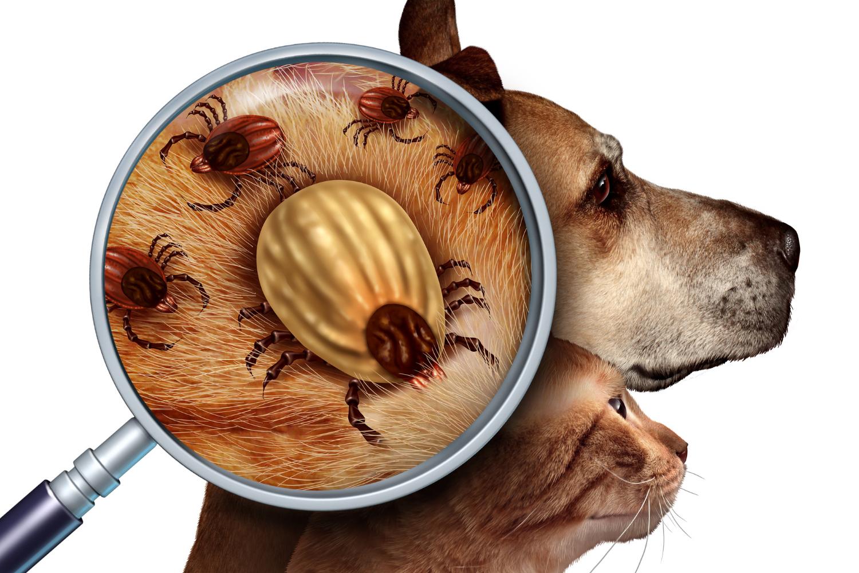 Je klíště pro psa vážně tak nebezpečný?