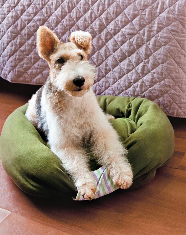 Jak ušít pelíšek pro psa z recyklovaného oblečení