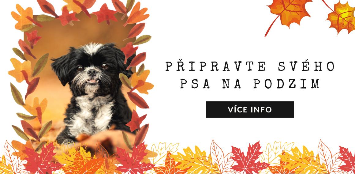 Podzim se psem