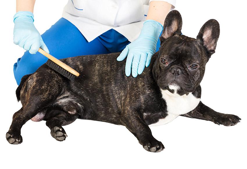 buldocci-alergie-wanteddog_2