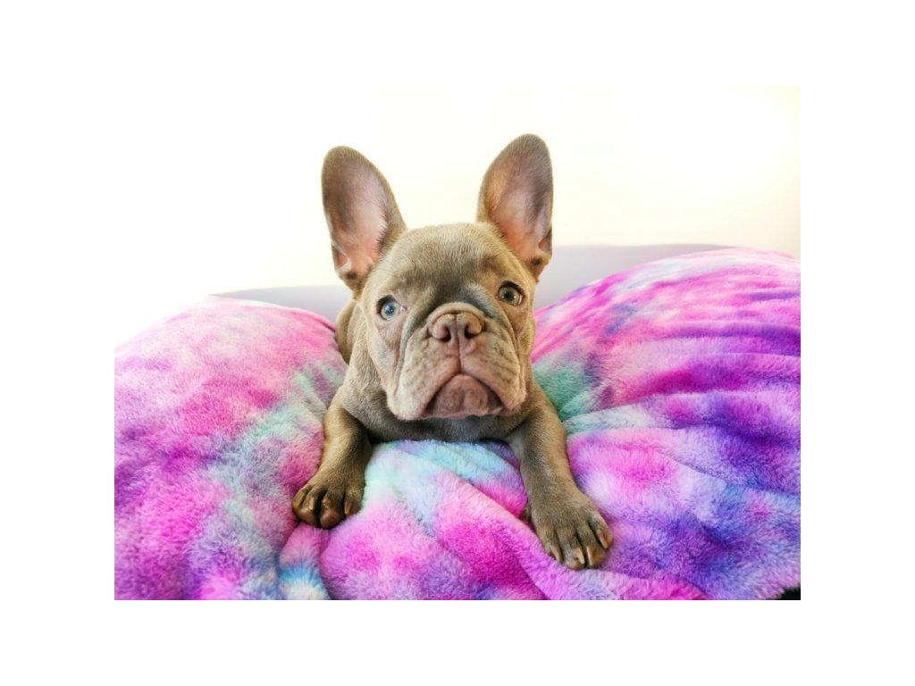 pestrobarevny pelech pro psa
