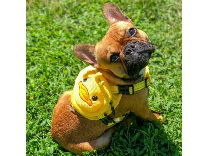 Ducky Dog Backpack Harness 1000x1000