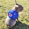 Postroje s batohem pro psa - Žralok