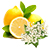 citron - bezový květ