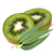 eukalyptus - kiwi