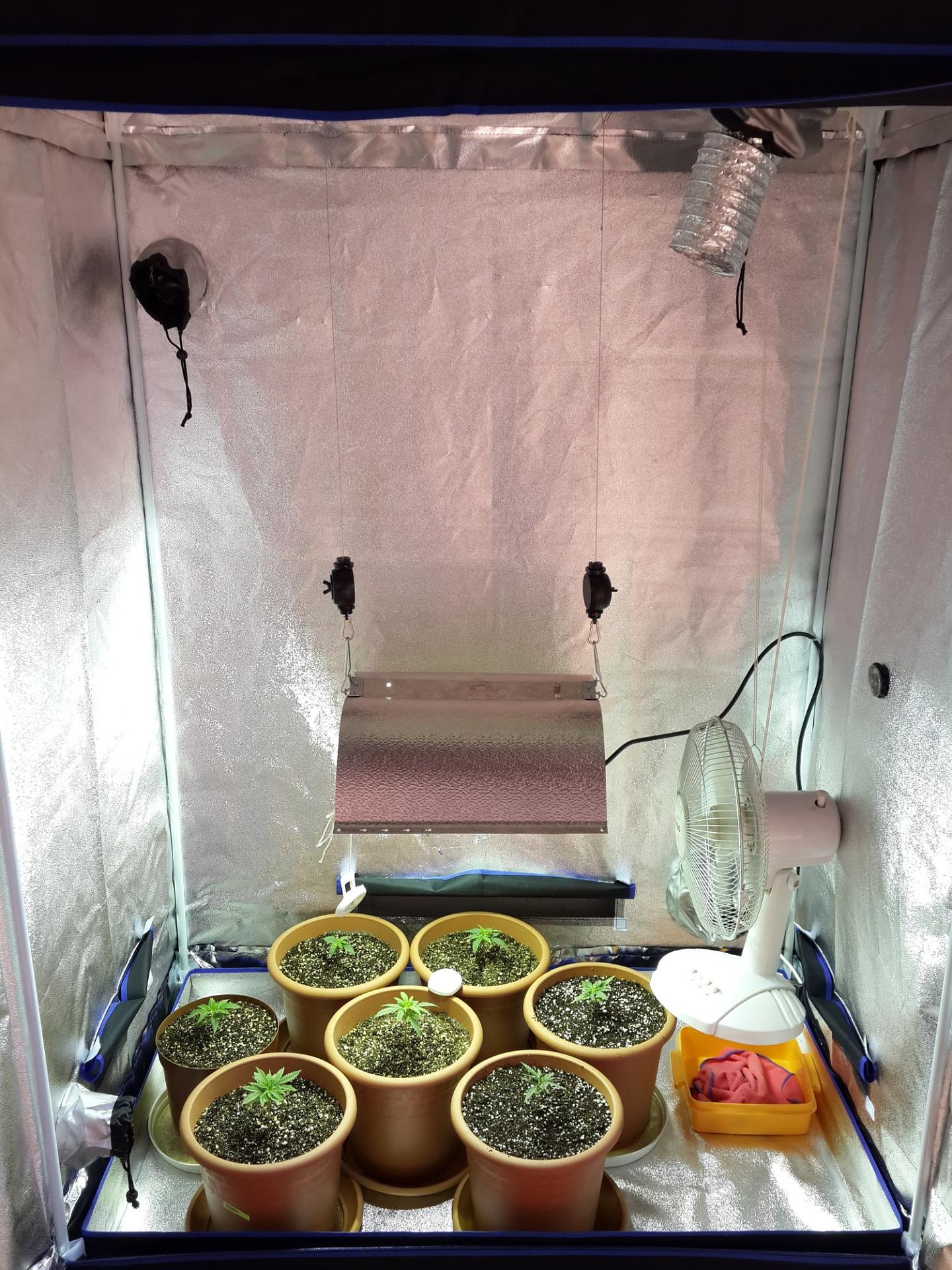 jak-pěstovat-konopí-doma-box