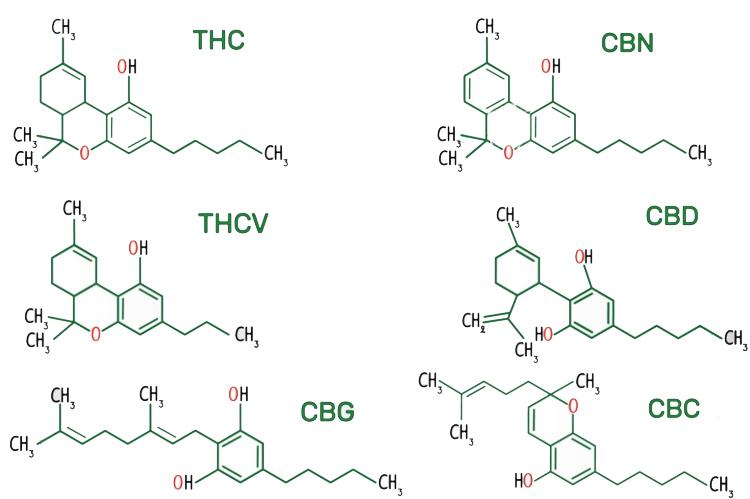 kanabinoidy-zakladni