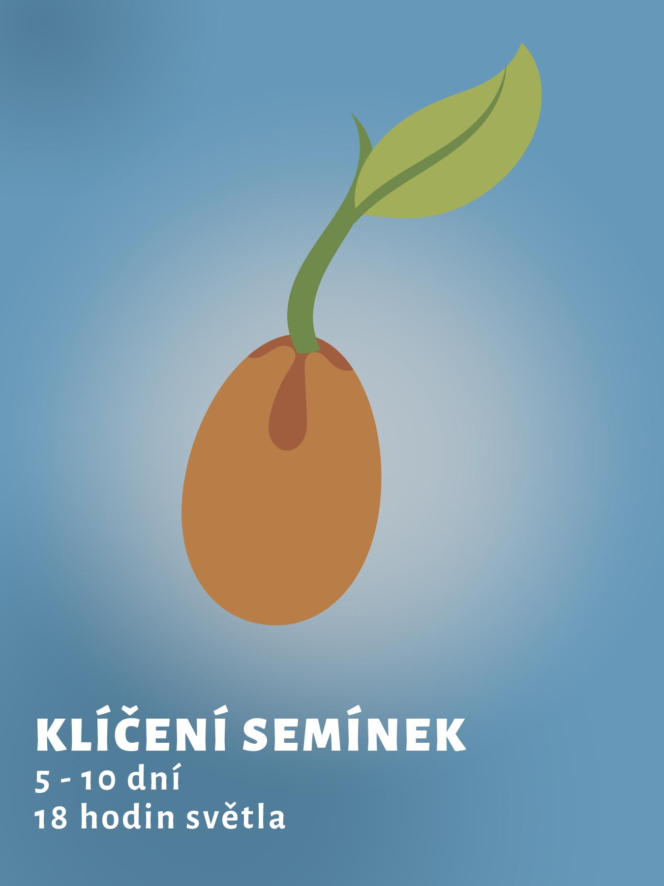 kliceni-semen-konopi_1