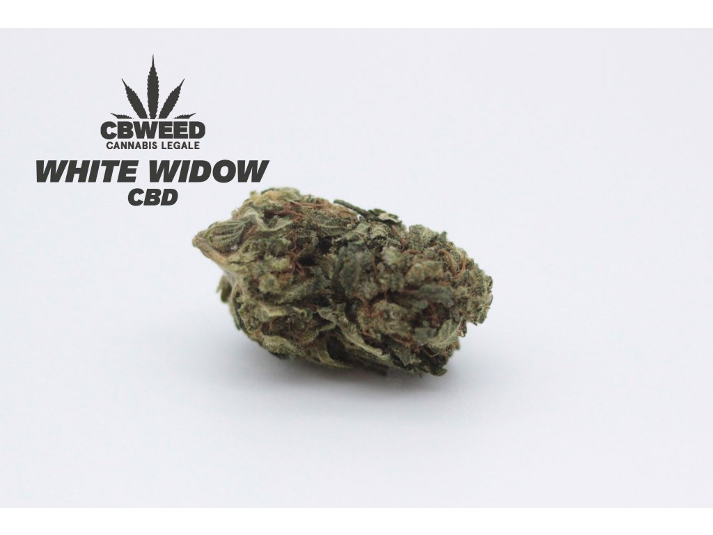 white widow cbd květy marihuany