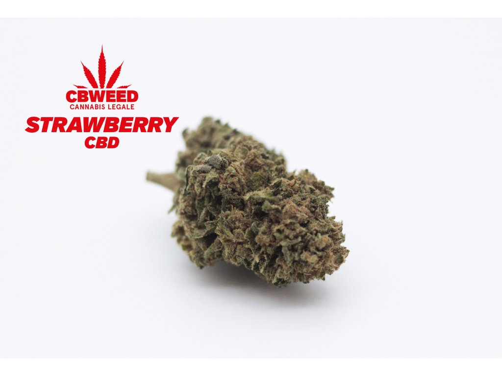 cbd konopi strawberry cbweed kvety