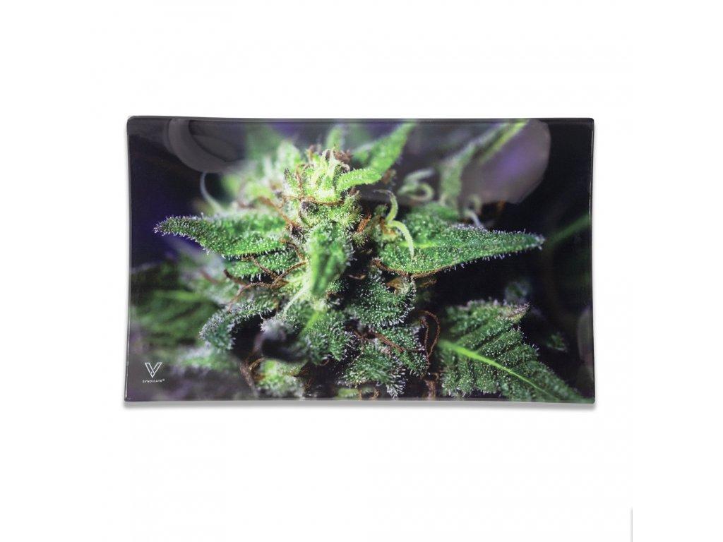 podklad marihuana bluedream vsyndicate tray