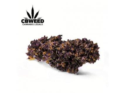 fialova cbd marihuana cbweed