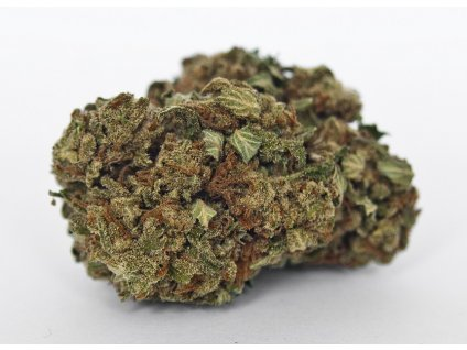 cbd konopi super silver haze marihuana