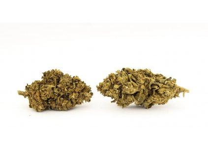 cbd konopi haze trava marihuana