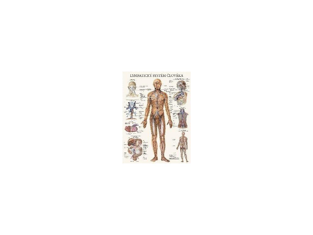 Lymfatický systém - anatomický plakát