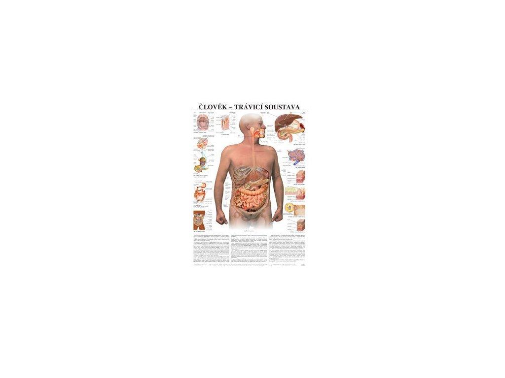 Tráviaca sústava človeka - anatomický plagát