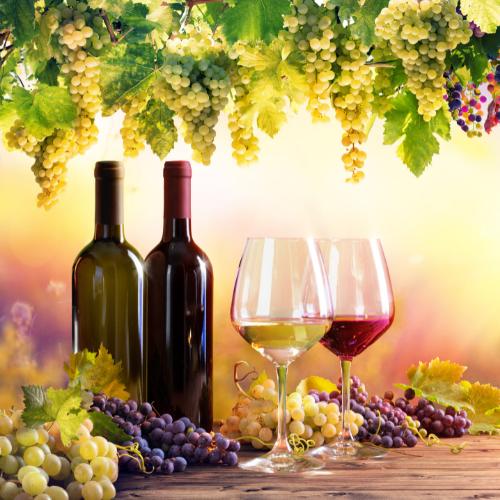 Průvodce francouzskými víny