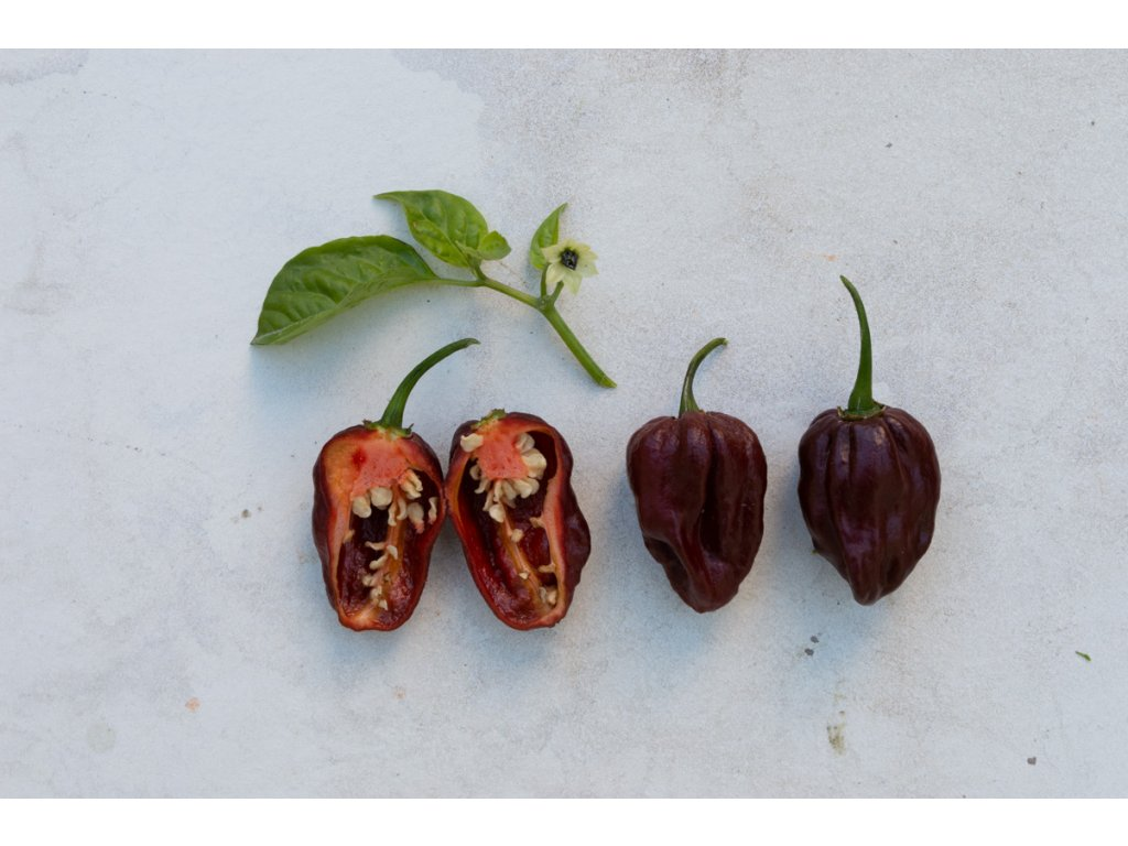 FATALII BROWN