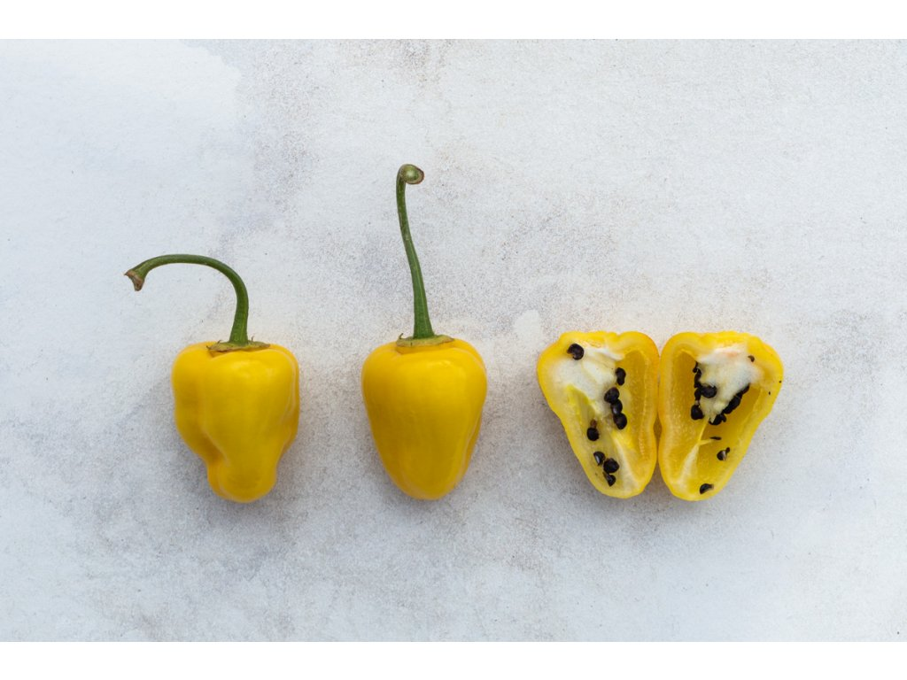 rocoto yellow (3)