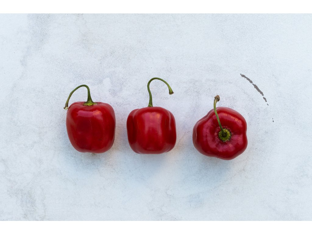 ROCOTO_red