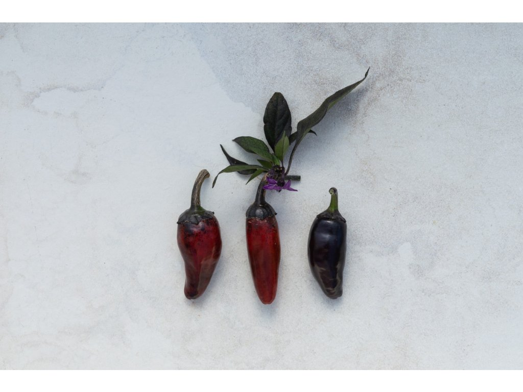 Jalapeňo Purple