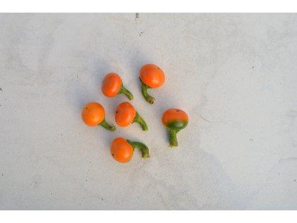 korál orange (7).NEF