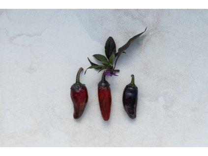 Jalapeňo Purple